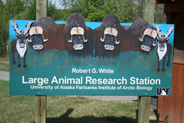 large animal research pic
